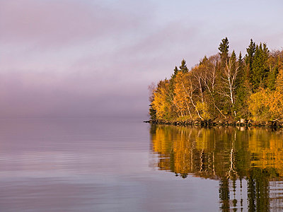 Trees reflected in a lake - p4426087f by Design Pics