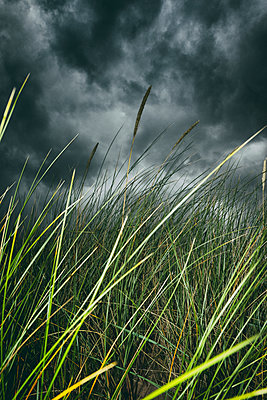 Stormy weather beach grass clouds close-up detail - p609m1490712 by WRIGHT