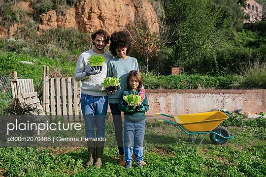 Happy family holding lettuce seedlings in a vegetable garden - p300m2070466 by Gemma Ferrando