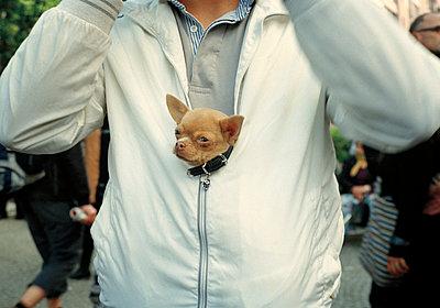 Chihuahua - p1317m1149845 von teryoshi