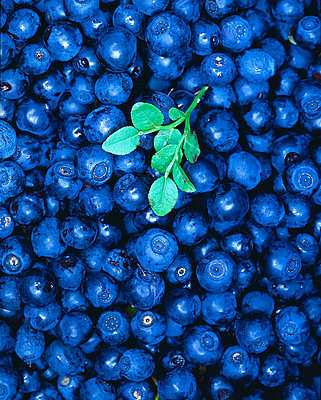 Close-up of heap of blueberries - p3488552 by Jan-Peter Lahall