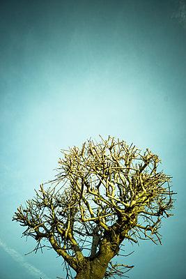 Cut tree - p1657m2257710 by Kornelia Rumberg