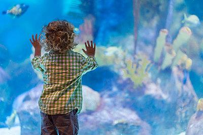 Caucasian baby boy admiring fish in aquarium - p555m1414225 by Marc Romanelli
