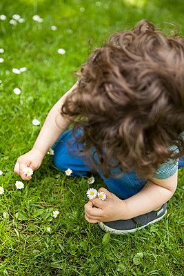 Junge pflückt Gänseblümchen - p045m1441009 von Jasmin Sander