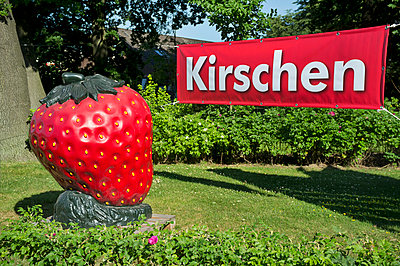 Information sign and fake strawberry - p229m1042862 by Martin Langer