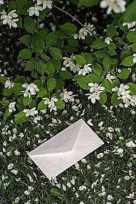 Brief im Garten - p971m916562 von Reilika Landen