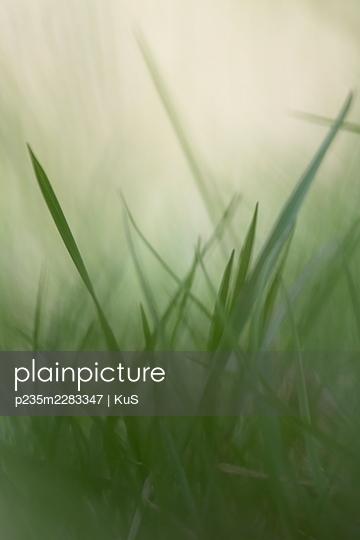 p235m2283347 by KuS