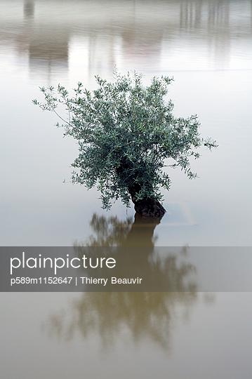 p589m1152647 von Thierry Beauvir