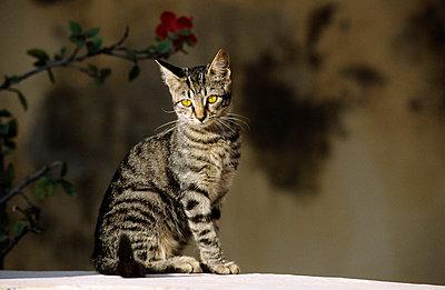 Streunende Katze - p3300391 von Harald Braun