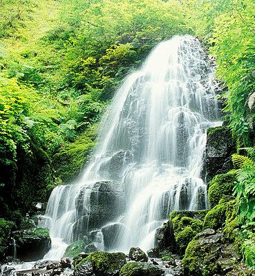 Fairy Falls, Columbia River Gorge, Oregon, USA - p4428558f by Design Pics