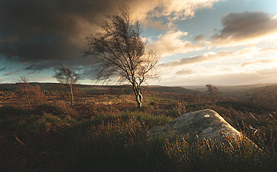 Blustery winds blowing isolated trees in the Peak District, South Yorkshire, Yorkshire, England, United Kingdom - p871m2101571 by Chris Cook