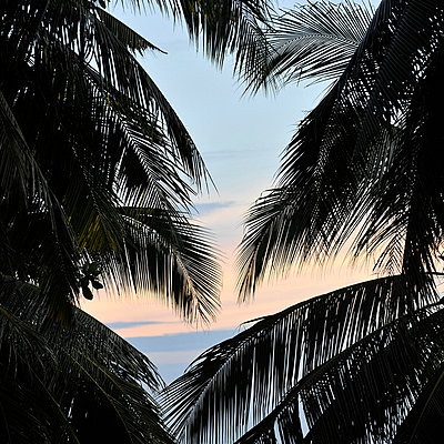 Sonnenuntergang hinter Palmen - p9490042 von Frauke Schumann