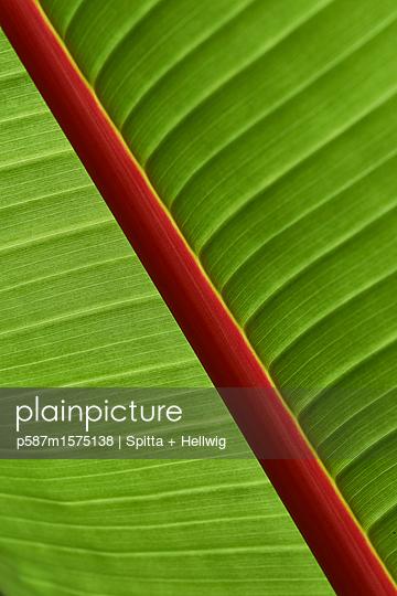Blatt - p587m1575138 von Spitta + Hellwig