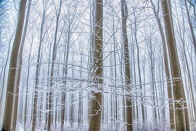 Wald - p1205m1515962 von Toni Anzenberger