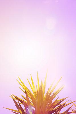 Hot outside - p454m1526317 by Lubitz + Dorner