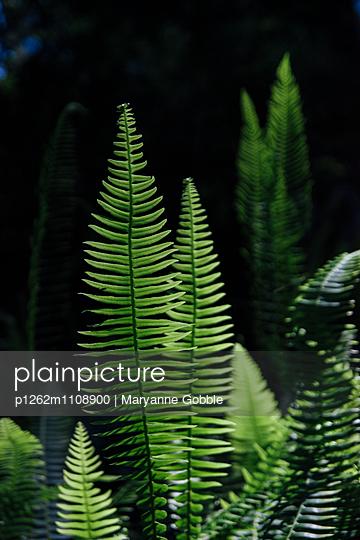 Green Fern - p1262m1108900 by Maryanne Gobble