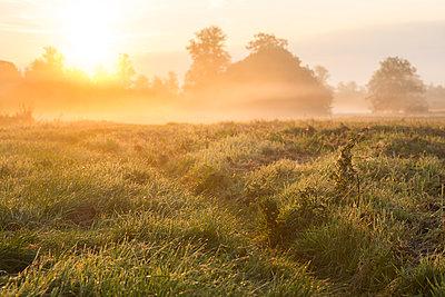 Meadow at sunrise - p1057m940316 by Stephen Shepherd