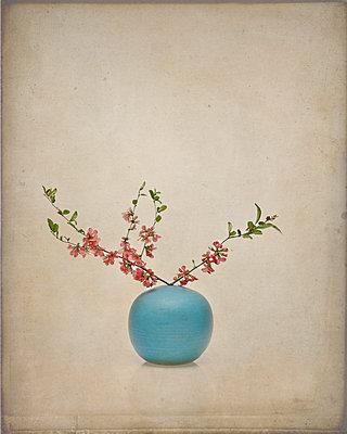 Vase - p1312m1137629 von Axel Killian