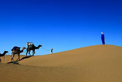 Trough the desert - p503m2135183 by Fabrice Arfaras