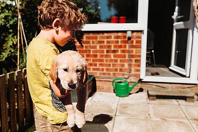 Boy holding golden retriever labrador puppy in yard - p1166m2190481 by Cavan Images