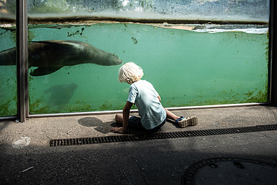 Boy watching a seal in a zoo - p1354m2292919 by Kaiser