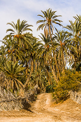 Weg durch Palmen - p280m972381 von victor s. brigola
