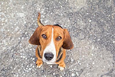 Stray dog - p300m1581109 von Maria Maar
