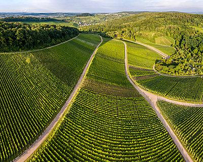 Germany, Baden-Wurttemberg, Rems Valley, Vineyars at Hanweiler Sattel - p300m2023523 by Stefan Schurr