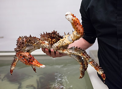 Alaskan King Crab - p390m2109343 by Frank Herfort