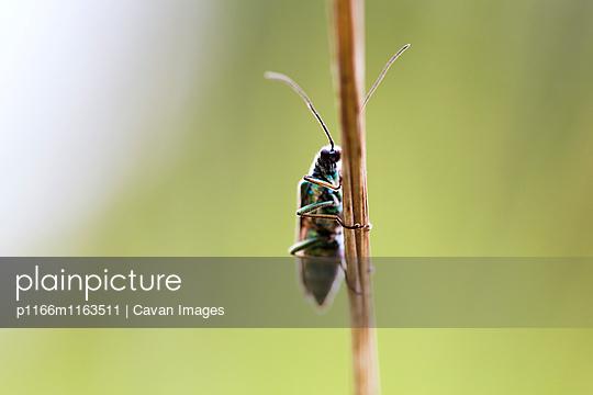 p1166m1163511 von Cavan Images