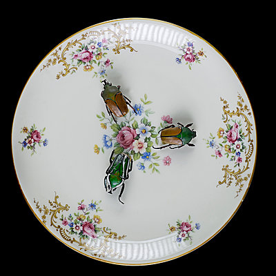 Three beetles on plate with floral pattern - p1366m2260562 by anne schubert