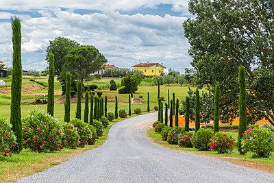 Italy, Tuscany, Monsummano Terme, country road - p300m2029680 by JLPfeifer