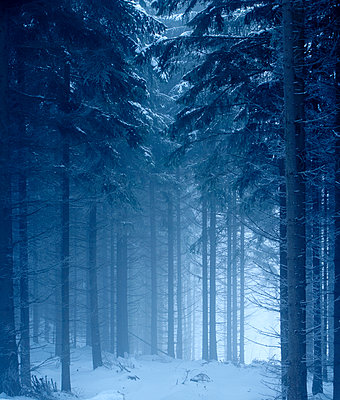 Winter forest - p312m1229179 by Stefan Isaksson