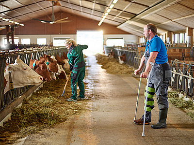 Farmer on crutches watching woman feeding cows in stable on a farm - p300m1567825 by Christian Vorhofer