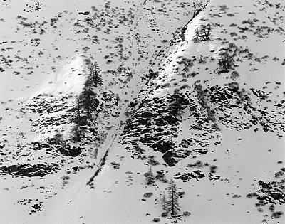 Hohe Tauern; Bergwiesen und Zirbelkiefern - p1016m815741 von Jochen Knobloch