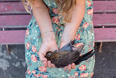 Mädchen hält toten Vogel - p1308m2126759 von felice douglas