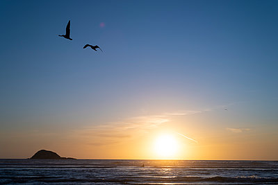 Sunset at Muriwai  - p1369m2164467 by Chris Hooton