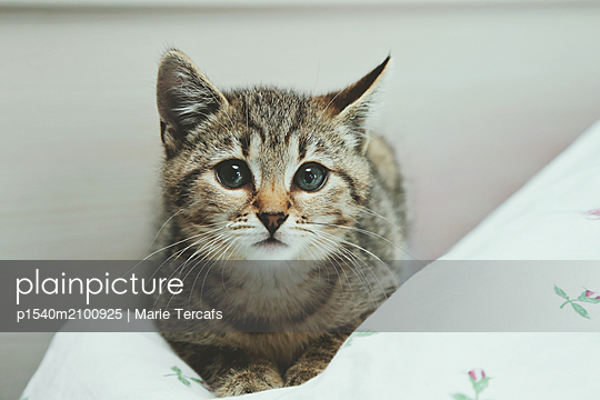 Tabby kitten laying on a flower sheet - p1540m2100925 by Marie Tercafs