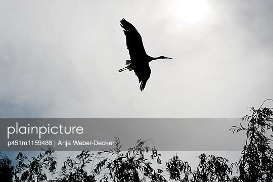 Storch im Elsass - p451m1159488 von Anja Weber-Decker