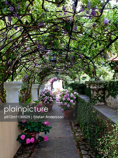 Bogengang mit Kletterpflanzen und Blumen - p972m1136629 von Stefan Andersson