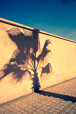 Shadow of a palm tree - p432m887210 by mia takahara