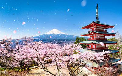 Chureito Pagoda with Mount Fuji during spring season, Fujiyoshida, Yamanashi prefecture, Honshu island, Japan - p651m2006193 by Jan Christopher Becke
