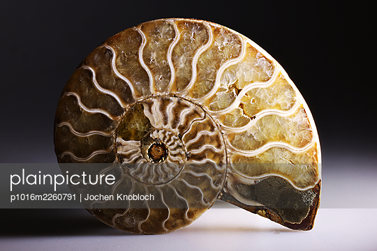 Ammonite, close-up - p1016m2260791 by Jochen Knobloch