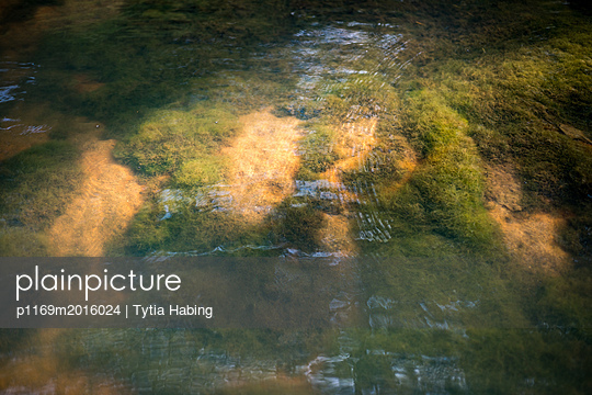 Moss in River - p1169m2016024 by Tytia Habing
