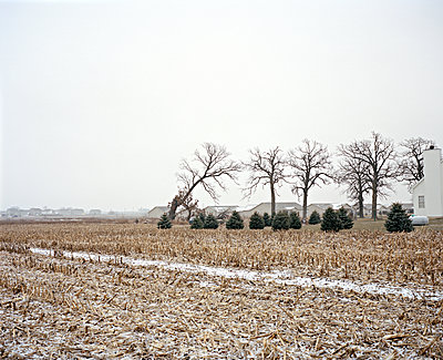 Tornado Trees - p1415m2076768 by Sophie Barbasch