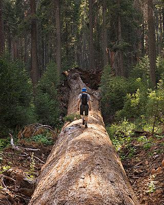 Hiker walking on fallen tree - p352m2120314 by Gustaf Emanuelsson