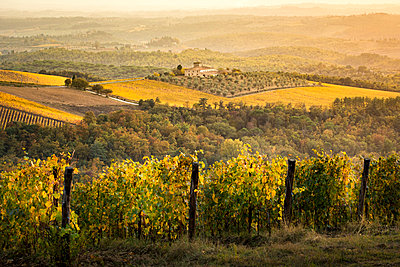 Vineyards during autumn near Gaiole in Chianti, Florence province, Tuscany, Italy - p651m2085151 by Stefano Termanini