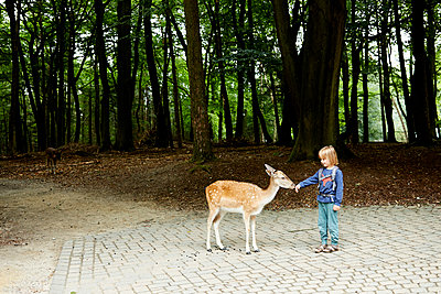 Little boy and doe in open-air enclosure - p1511m2223076 by artwall