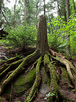 A damaged tree with intact roots - p30118878f by Markus Goeres