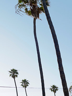 Palm trees against blue sky - p312m800125f by Pia Ulin